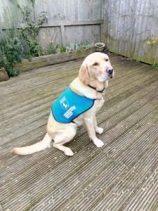 Puppy Guide Dog Visit